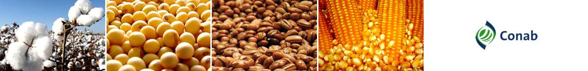 Asp Corretora de Cereais - Primavera do Leste / MT
